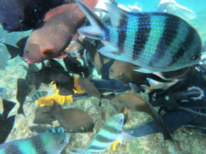 沖縄で体験ダイビング 魚で前が見えない?!